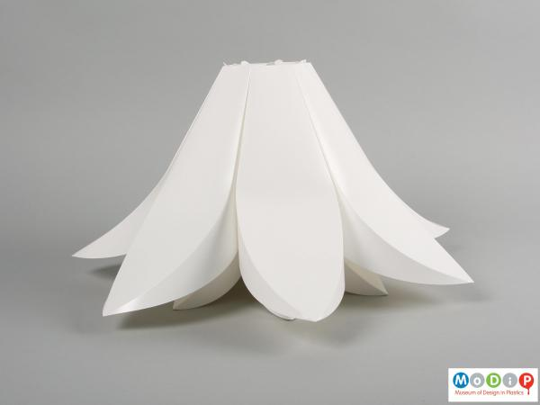 Side view of a lamp shade showing the curving petals.